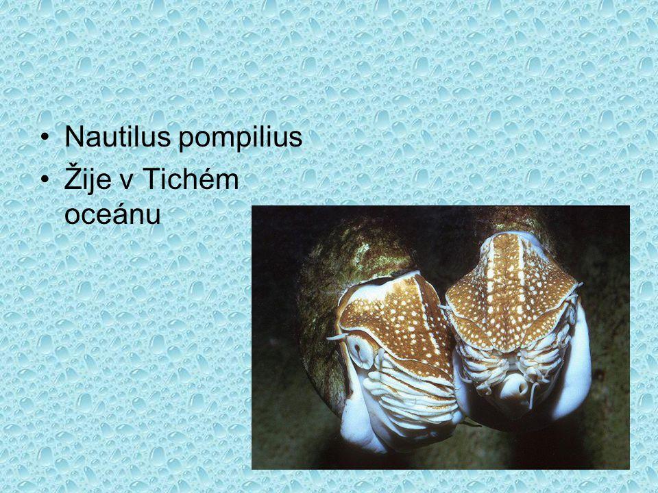 Nautilus pompilius Žije v Tichém oceánu