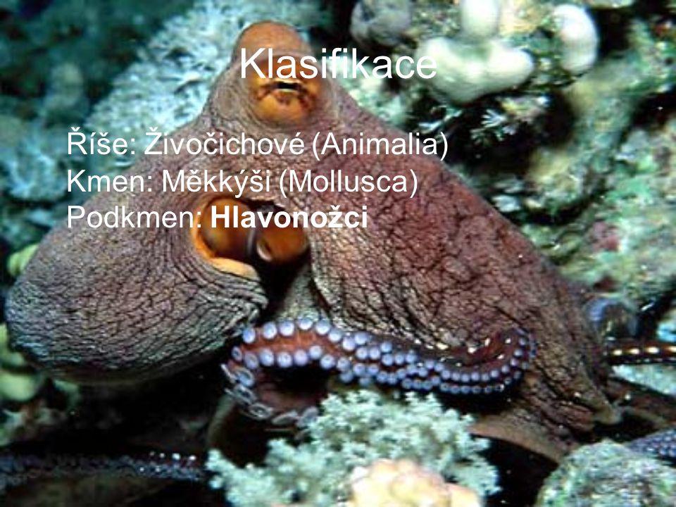 Klasifikace Říše: Živočichové (Animalia) Kmen: Měkkýši (Mollusca) Podkmen: Hlavonožci