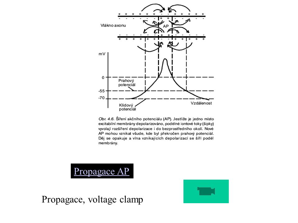 Propagace AP Propagace, voltage clamp