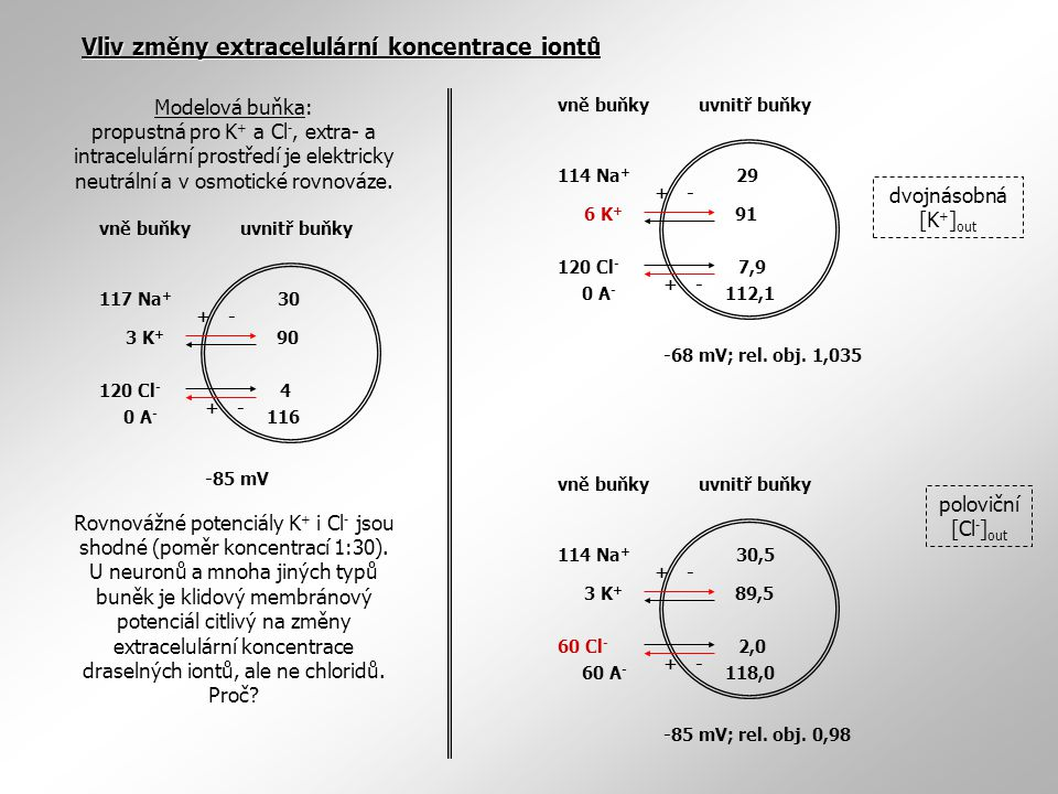 Rovnovážné potenciály K+ i Cl- jsou shodné (poměr koncentrací 1:30).