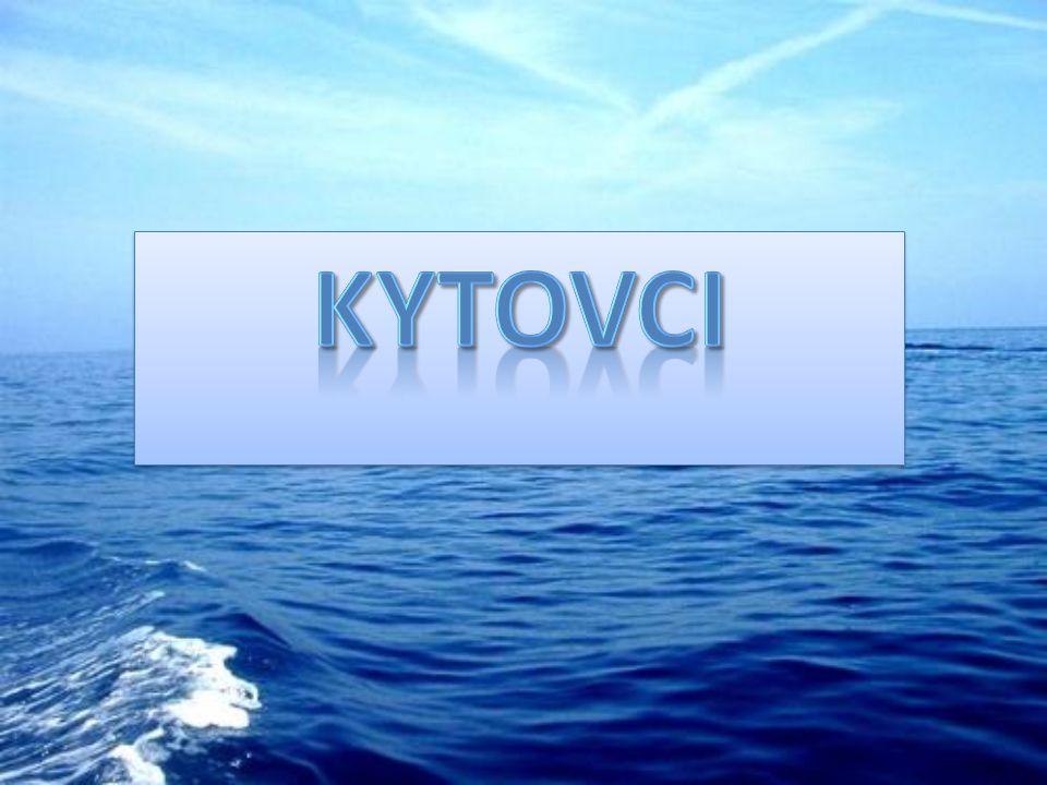 Kytovci