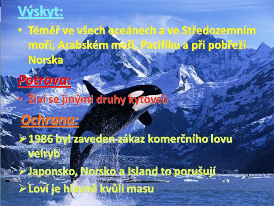 Výskyt: Téměř ve všech oceánech a ve Středozemním moři, Arabském moři, Pacifiku a při pobřeží Norska.