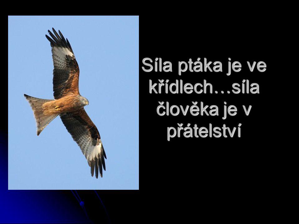 Síla ptáka je ve křídlech…síla člověka je v přátelství