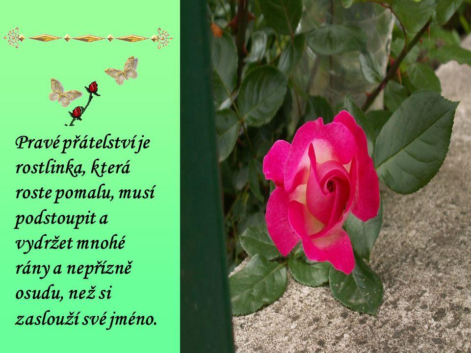 Pravé přátelství je rostlinka, která roste pomalu, musí podstoupit a vydržet mnohé rány a nepřízně osudu, než si zaslouží své jméno.