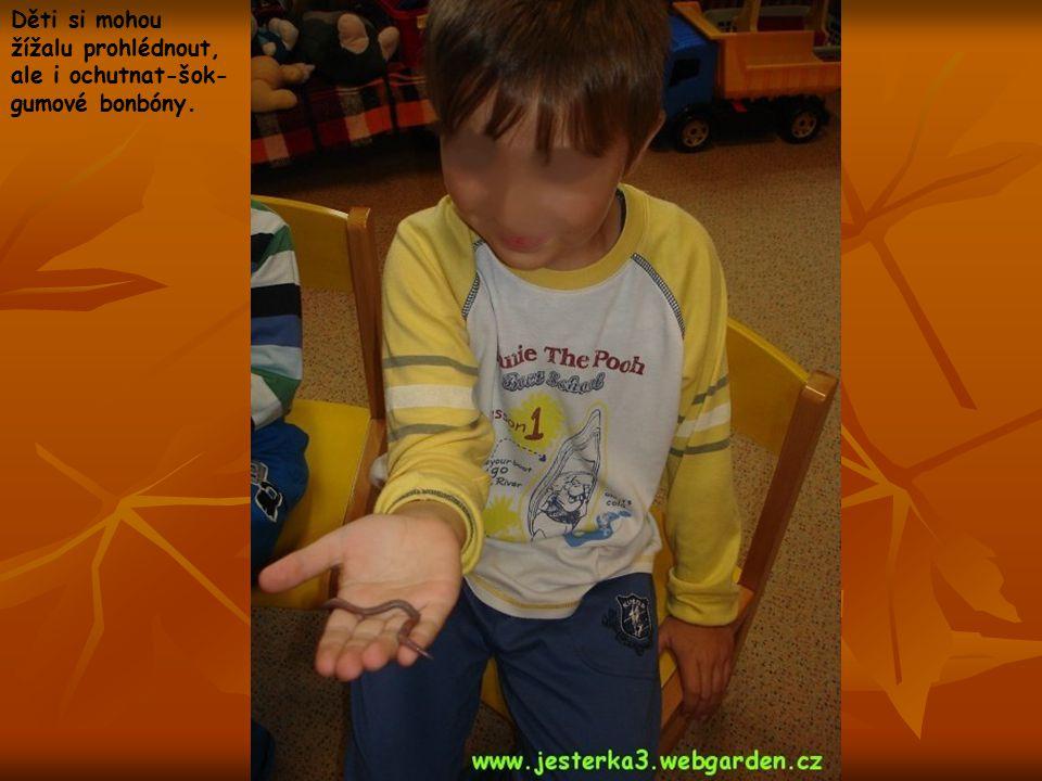 Děti si mohou žížalu prohlédnout, ale i ochutnat-šok-gumové bonbóny.