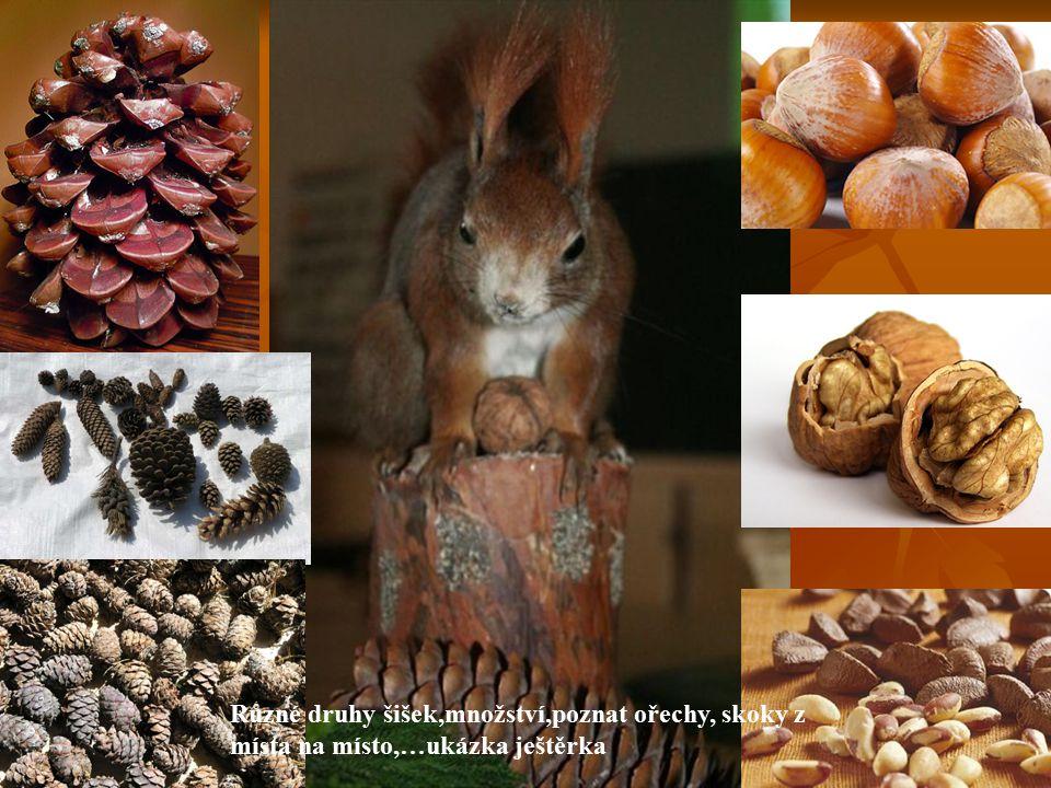 Různé druhy šišek,množství,poznat ořechy, skoky z místa na místo,…ukázka ještěrka