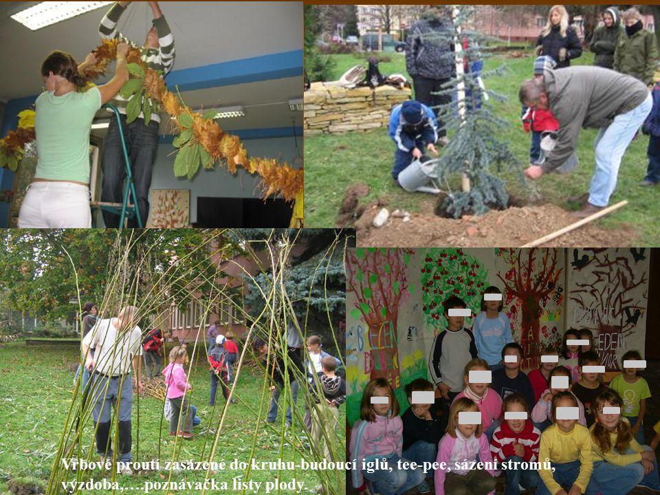 Vrbové proutí zasázené do kruhu-budoucí iglů, tee-pee, sázení stromů, výzdoba,….poznávačka listy plody.