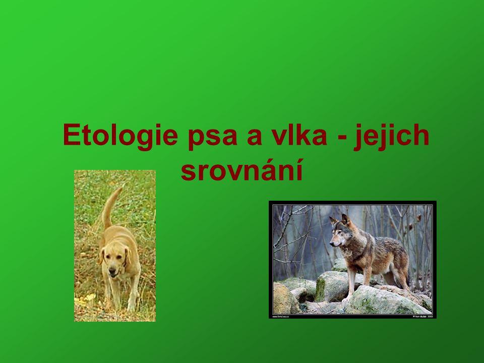 Etologie psa a vlka - jejich srovnání