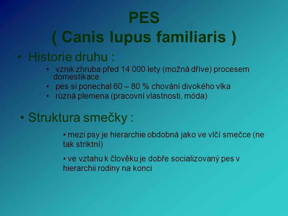 PES ( Canis lupus familiaris )