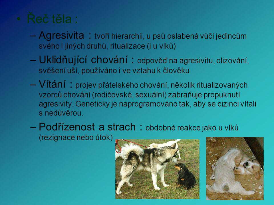 Řeč těla : Agresivita : tvoří hierarchii, u psů oslabená vůči jedincům svého i jiných druhů, ritualizace (i u vlků)