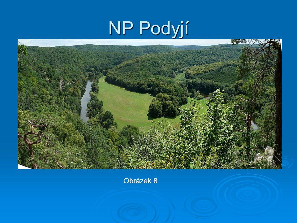 NP Podyjí Obrázek 8