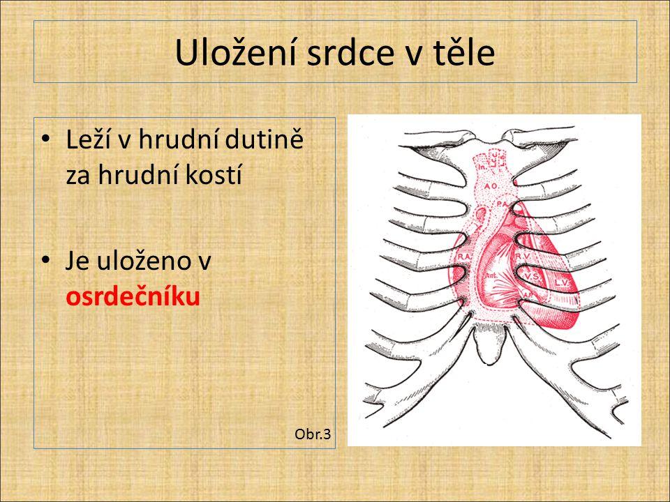 Uložení srdce v těle Leží v hrudní dutině za hrudní kostí