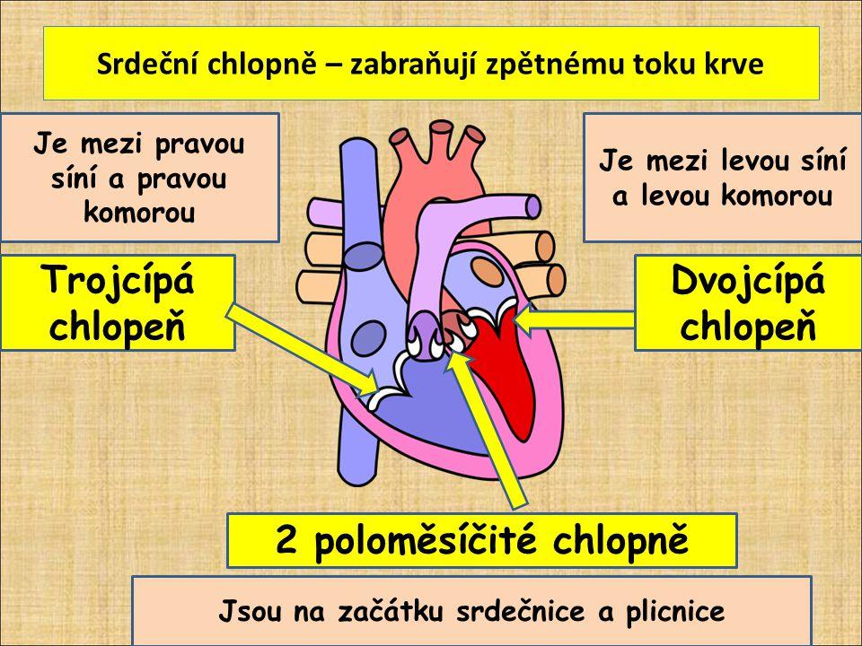 Srdeční chlopně – zabraňují zpětnému toku krve