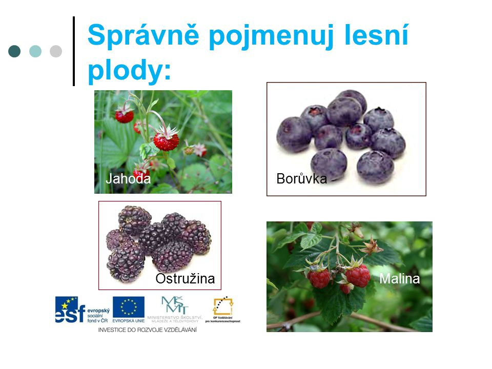 Správně pojmenuj lesní plody:
