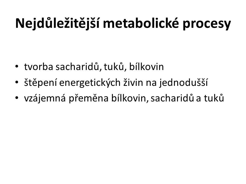 Nejdůležitější metabolické procesy