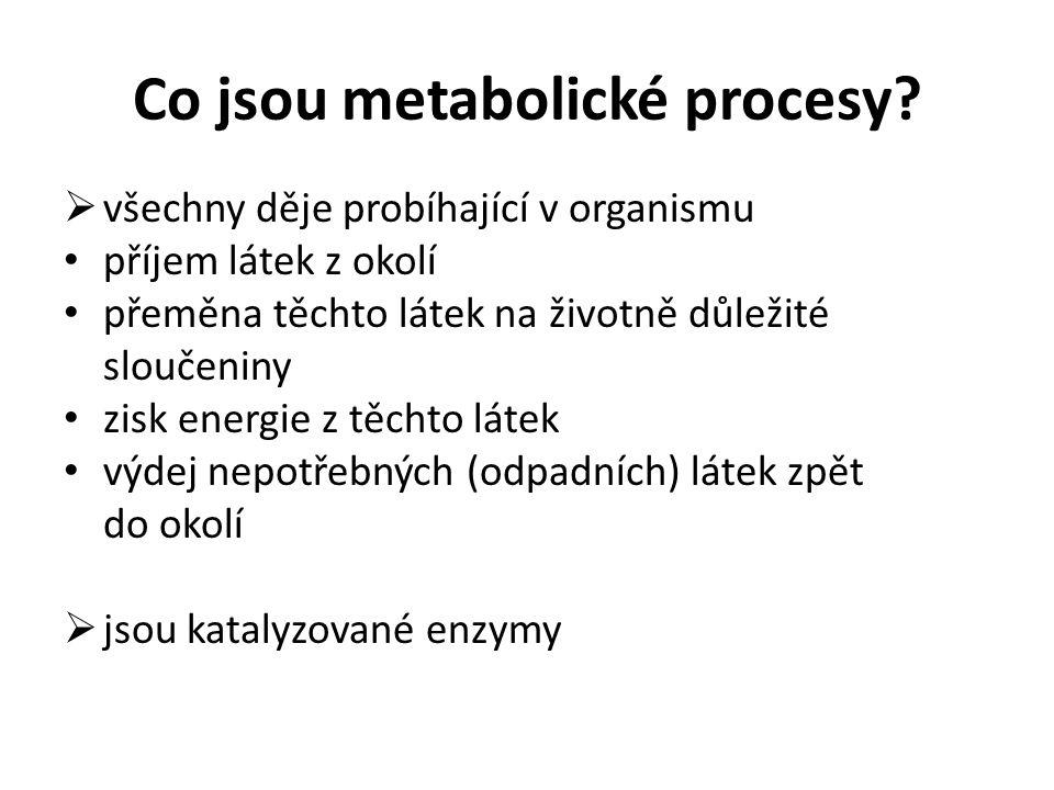 Co jsou metabolické procesy
