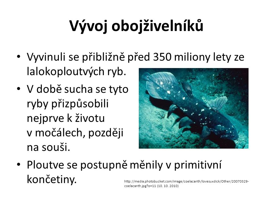 Vývoj obojživelníků Vyvinuli se přibližně před 350 miliony lety ze lalokoploutvých ryb.