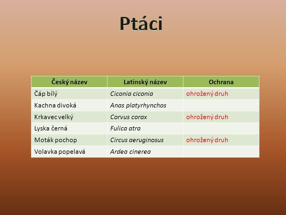 Ptáci Český název Latinský název Ochrana Čáp bílý Ciconia ciconia