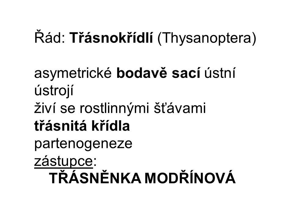 Řád: Třásnokřídlí (Thysanoptera)