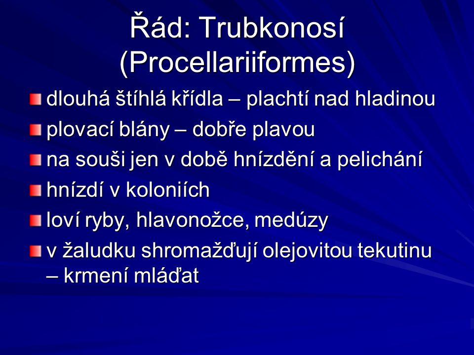 Řád: Trubkonosí (Procellariiformes)