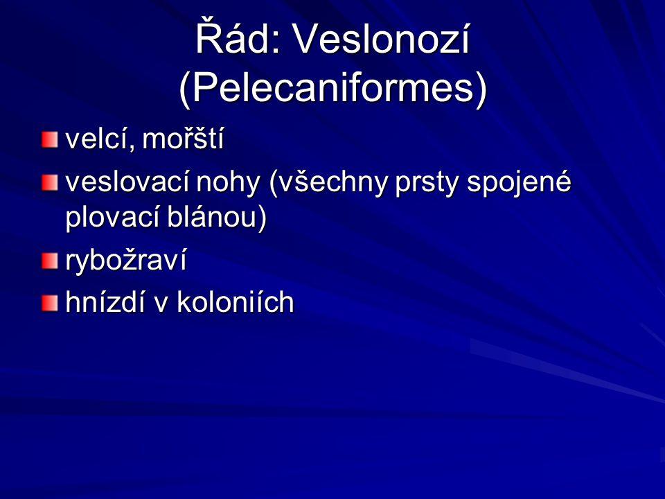 Řád: Veslonozí (Pelecaniformes)