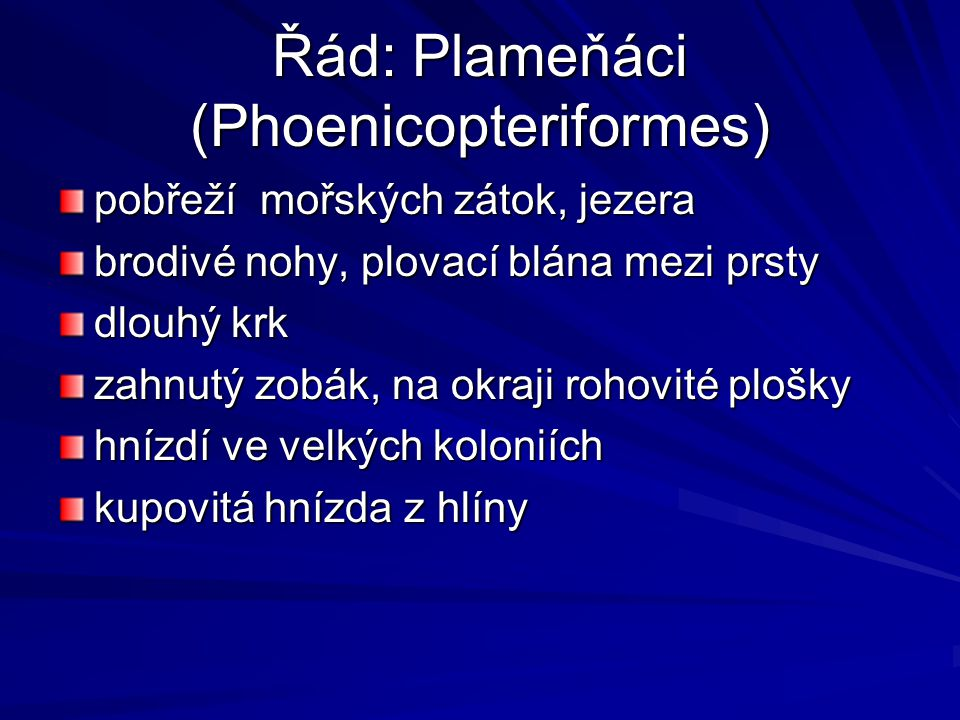 Řád: Plameňáci (Phoenicopteriformes)