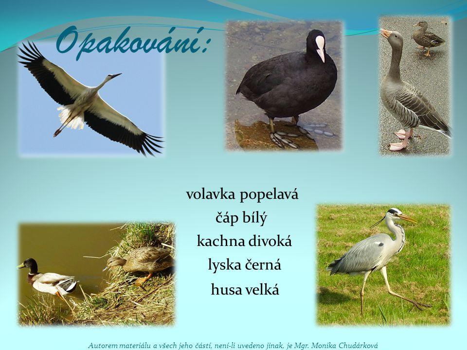 Opakování: volavka popelavá čáp bílý kachna divoká lyska černá