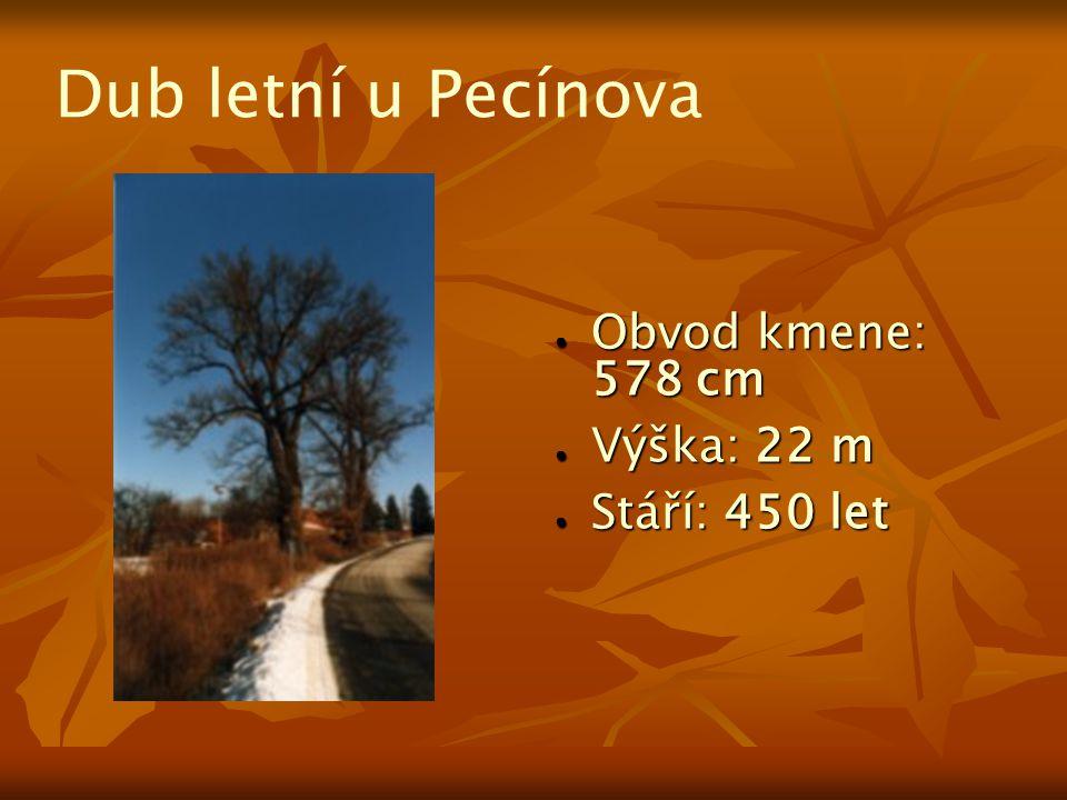 Dub letní u Pecínova Obvod kmene: 578 cm Výška: 22 m Stáří: 450 let
