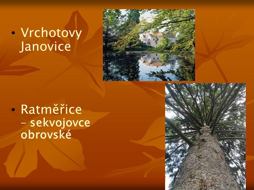 Vrchotovy Janovice Ratměřice – sekvojovce obrovské