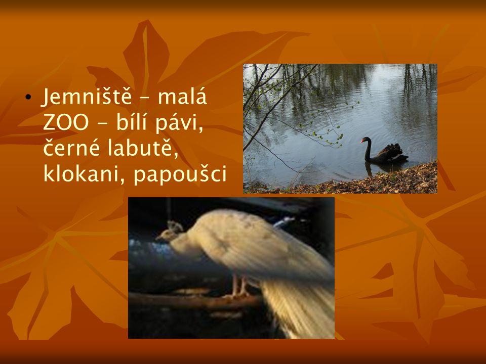 Jemniště – malá ZOO - bílí pávi, černé labutě, klokani, papoušci