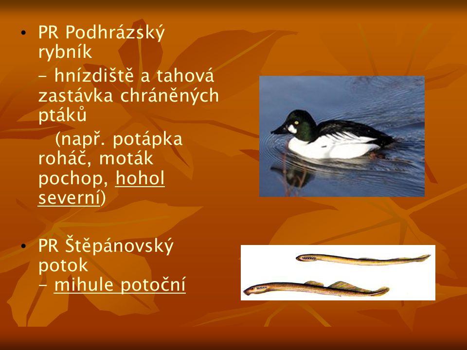 PR Podhrázský rybník - hnízdiště a tahová zastávka chráněných ptáků. (např. potápka roháč, moták pochop, hohol severní)