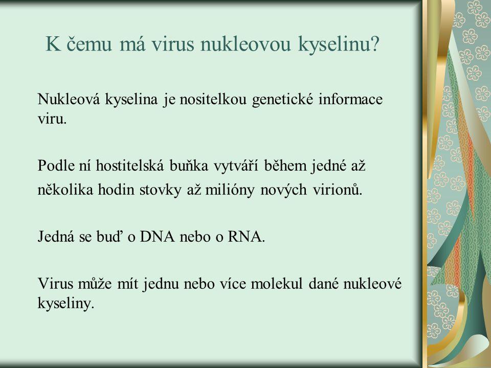 K čemu má virus nukleovou kyselinu