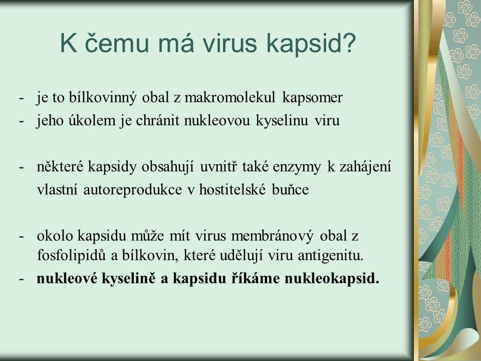 K čemu má virus kapsid je to bílkovinný obal z makromolekul kapsomer