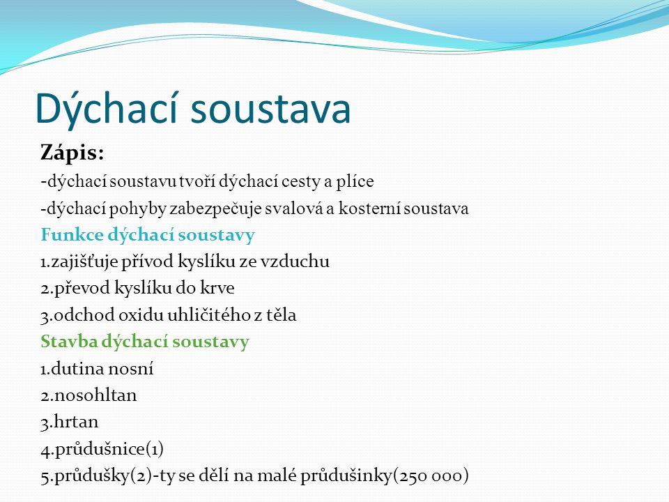 Dýchací soustava Zápis: -dýchací soustavu tvoří dýchací cesty a plíce