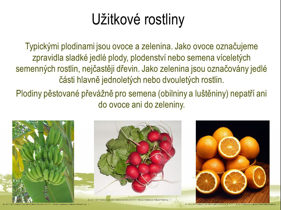 Užitkové rostliny