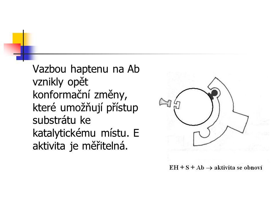 Vazbou haptenu na Ab vznikly opět konformační změny, které umožňují přístup substrátu ke katalytickému místu.