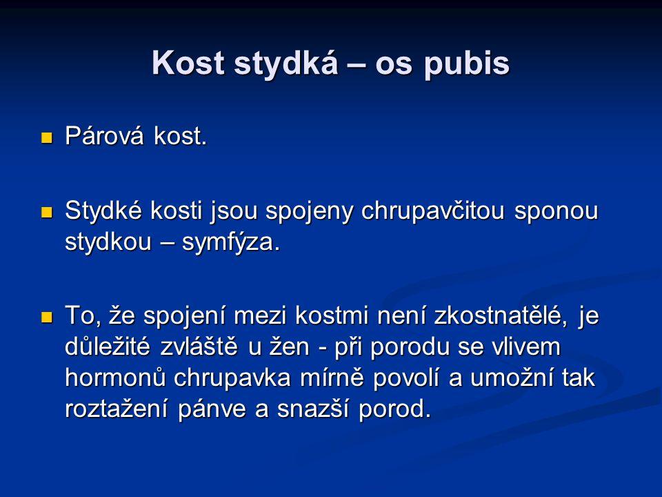 Kost stydká – os pubis Párová kost.