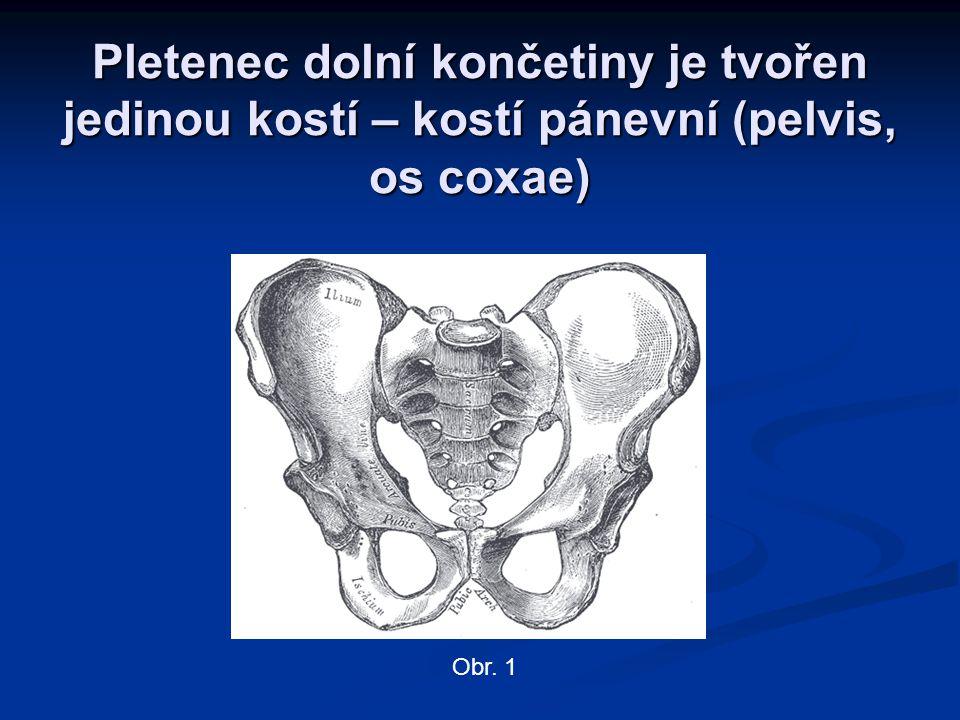 Pletenec dolní končetiny je tvořen jedinou kostí – kostí pánevní (pelvis, os coxae)