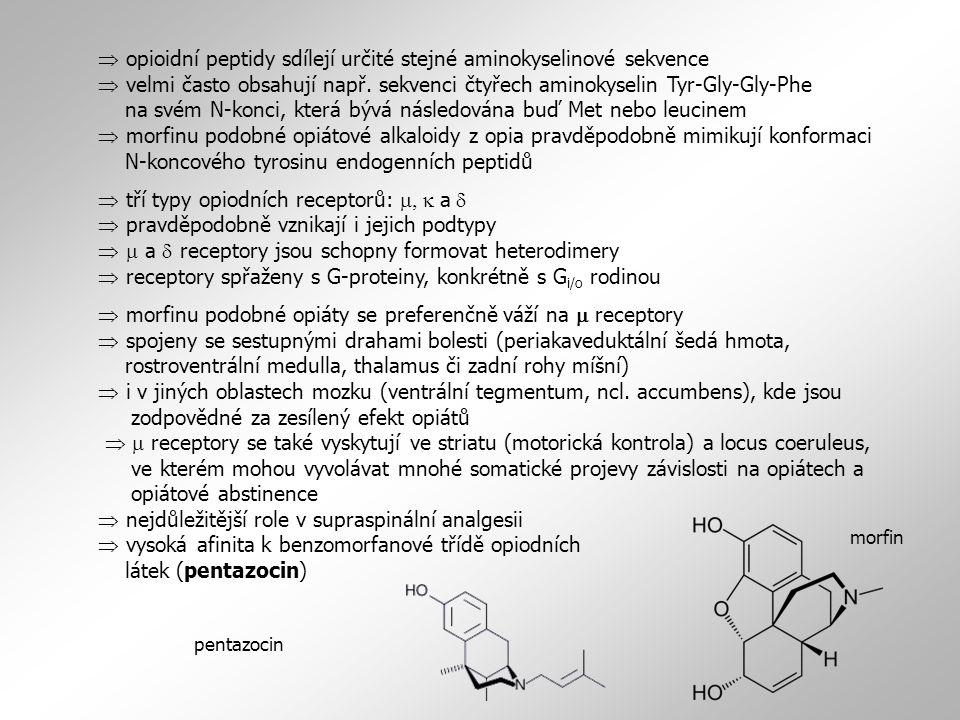  opioidní peptidy sdílejí určité stejné aminokyselinové sekvence  velmi často obsahují např. sekvenci čtyřech aminokyselin Tyr-Gly-Gly-Phe na svém N-konci, která bývá následována buď Met nebo leucinem  morfinu podobné opiátové alkaloidy z opia pravděpodobně mimikují konformaci N-koncového tyrosinu endogenních peptidů