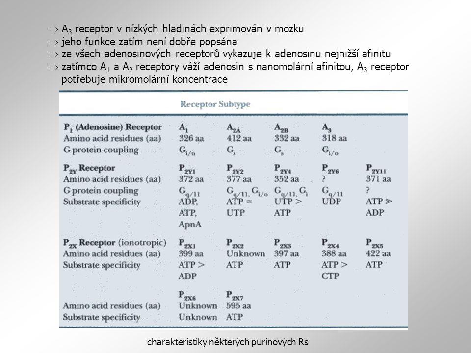 charakteristiky některých purinových Rs