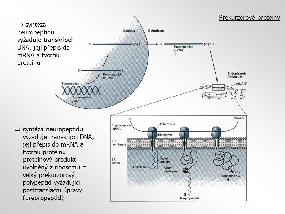 Prekurzorové proteiny