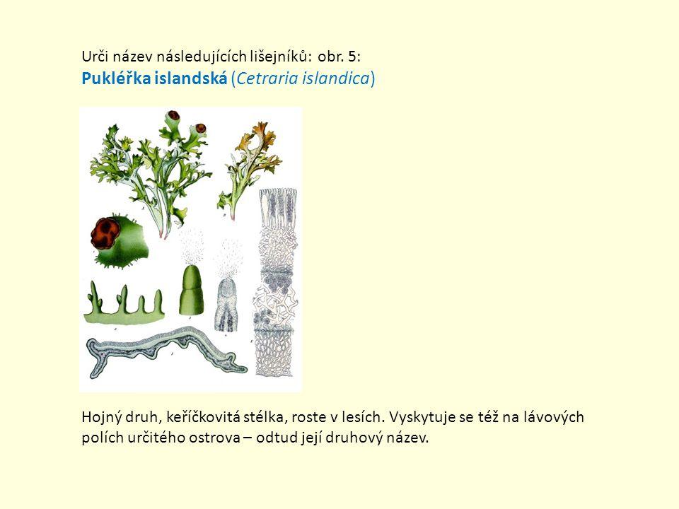 Pukléřka islandská (Cetraria islandica)