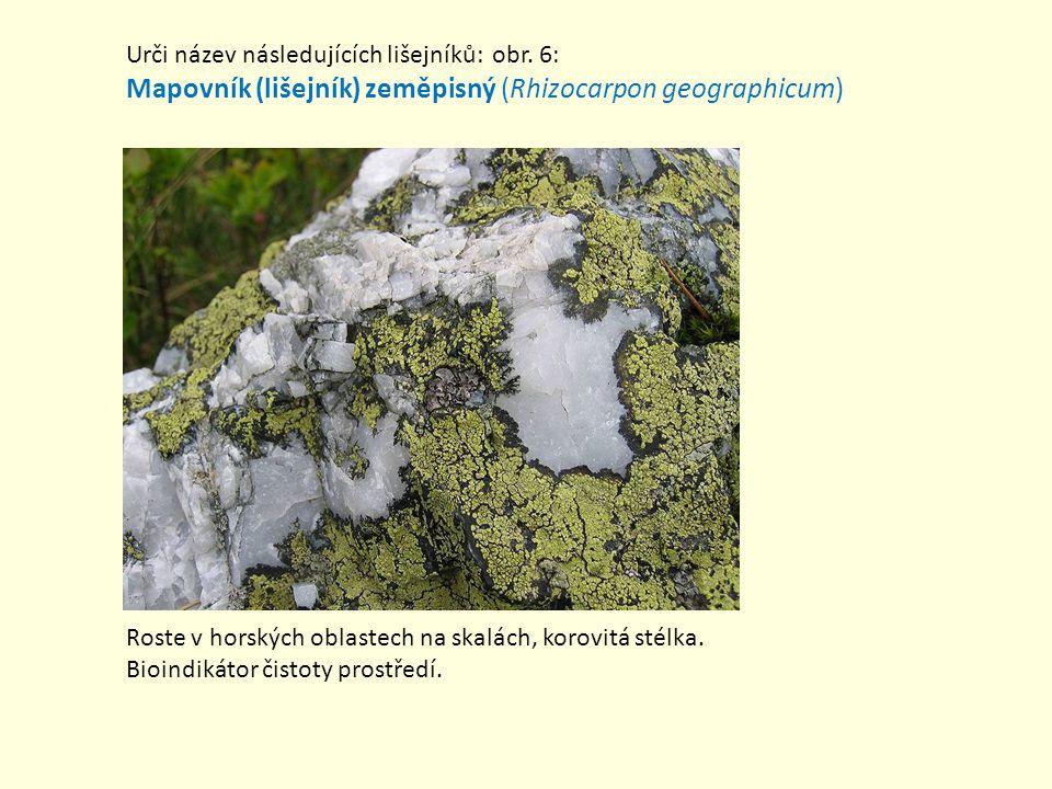 Mapovník (lišejník) zeměpisný (Rhizocarpon geographicum)