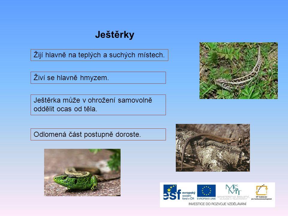 Ještěrky Žijí hlavně na teplých a suchých místech.