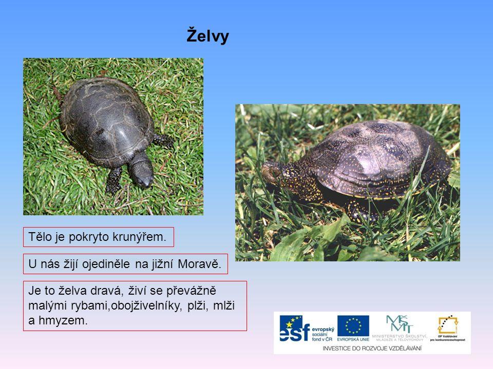 Želvy Tělo je pokryto krunýřem. U nás žijí ojediněle na jižní Moravě.