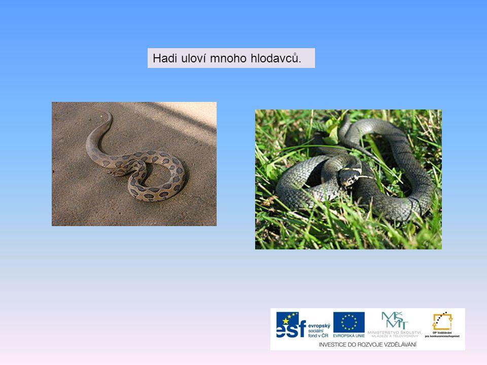 Hadi uloví mnoho hlodavců.