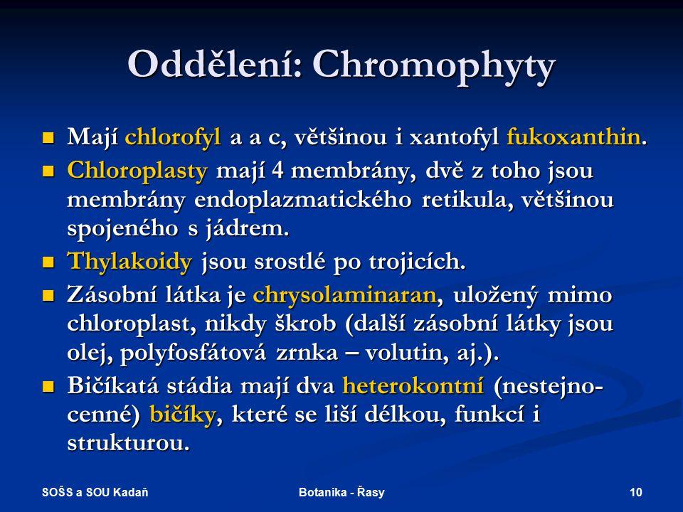 Oddělení: Chromophyty