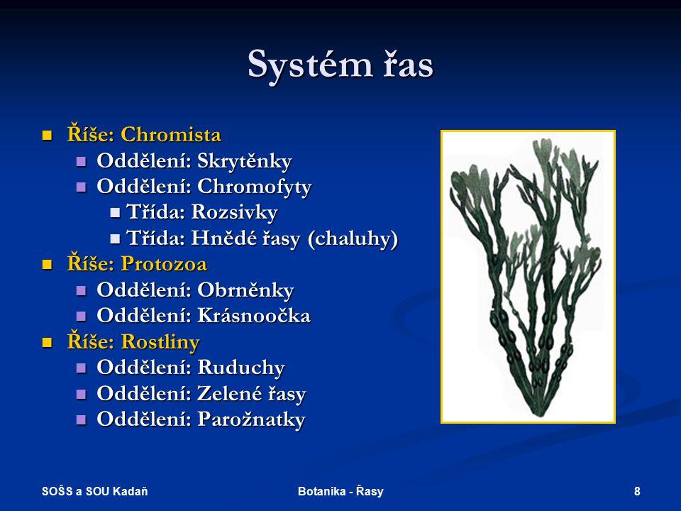 Systém řas Říše: Chromista Oddělení: Skrytěnky Oddělení: Chromofyty