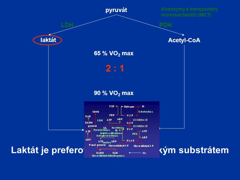 Laktát je preferovaným energetickým substrátem