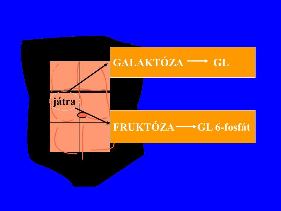 GALAKTÓZA GL játra FRUKTÓZA GL 6-fosfát